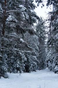 Деревья в зимнем лесу