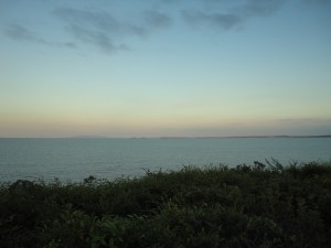 Новозеландский кустарник ни фоне океана